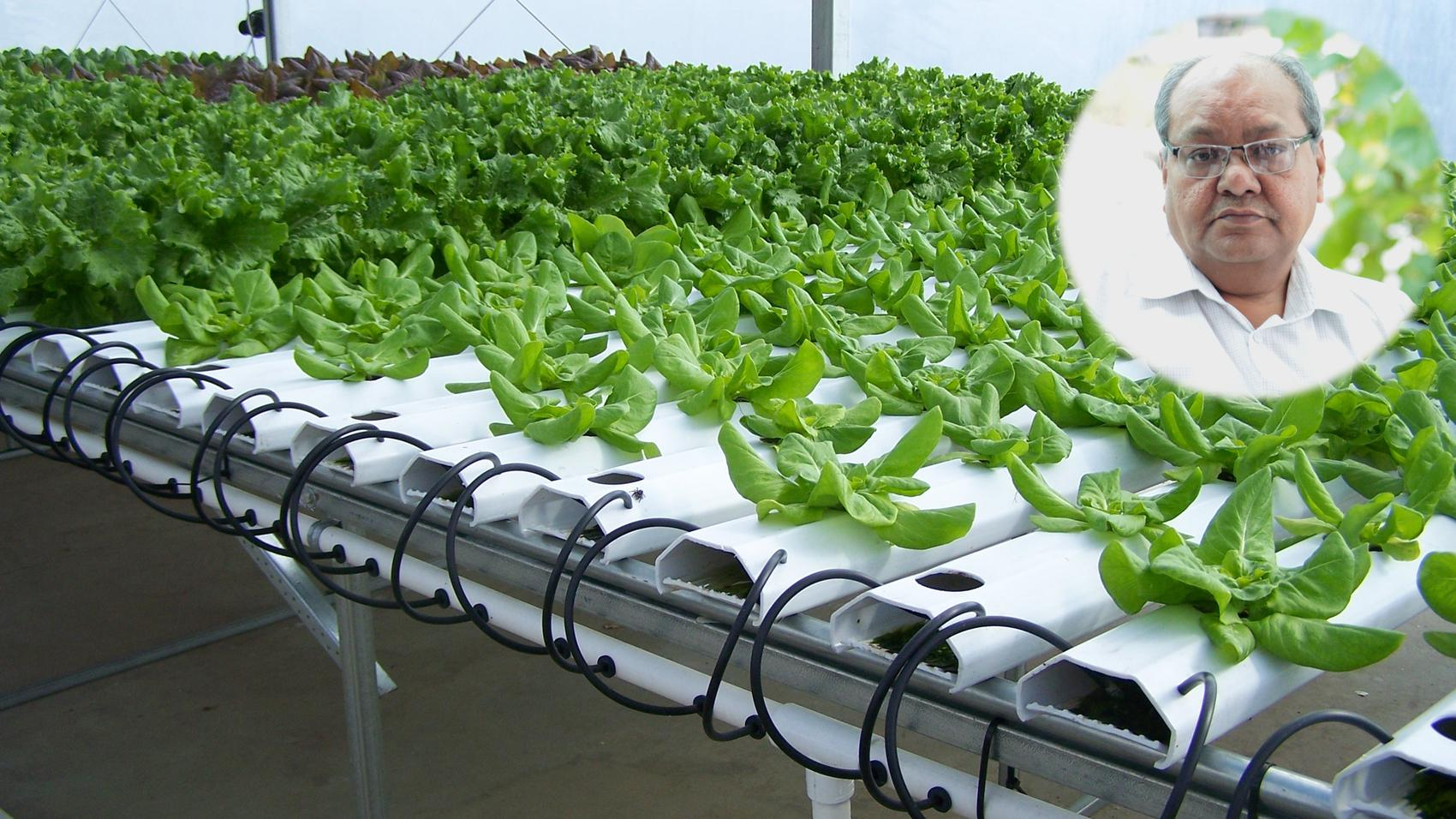 Career in Hydroponic Cultivation
